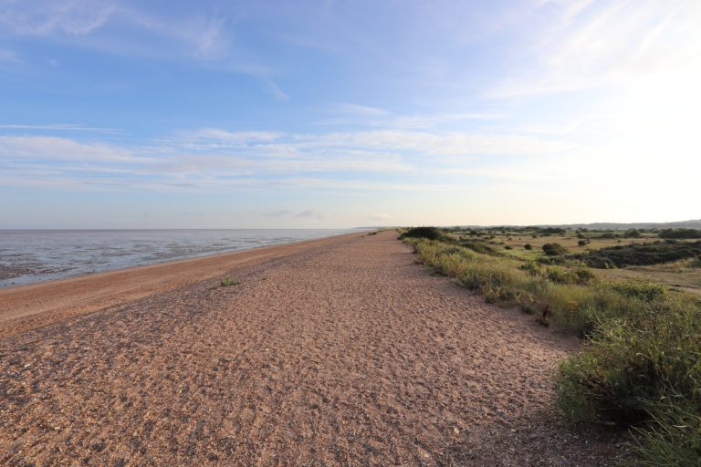 The shingle beach at Snettisham with the sea on the left and greenery on the right.