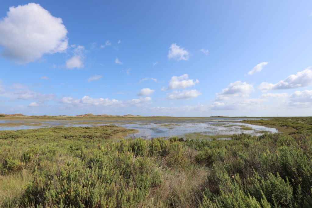 Wet marshes on a sunny day at Blakeney Point in Norfolk.