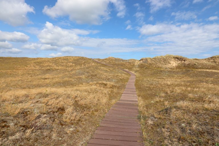 The wooden walkway winding through heathland at Blakeney Point.