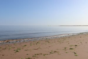 Seaweed along the shore at Brancaster beach.