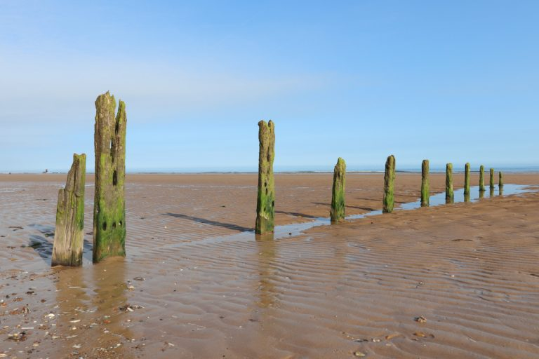 Wooden stumps in the mudflats at Brancaster beach.
