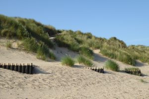 Grasses in the dunes at Brancaster beach.