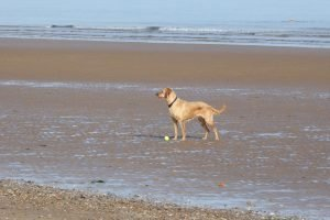 Dog and ball on the beach at Brancaster.