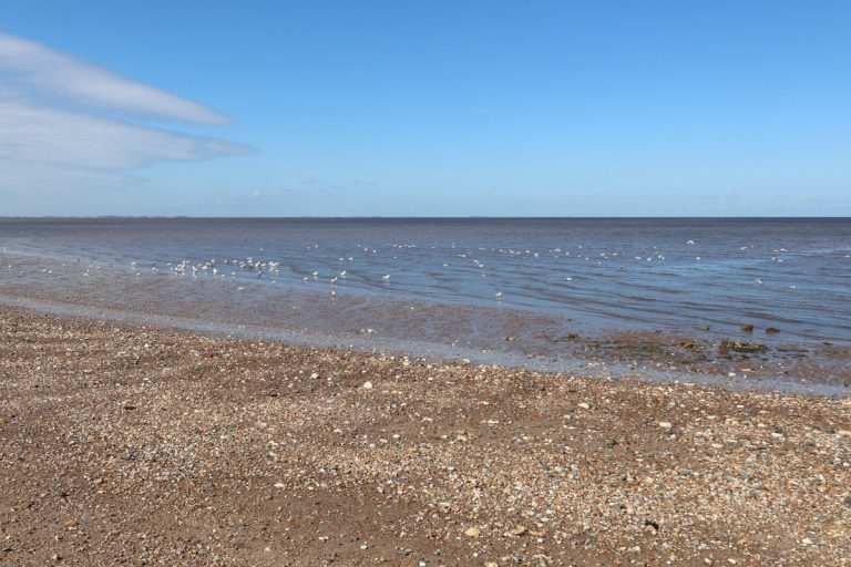 Seagulls in the sea at Heacham south beach.