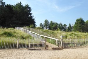 The wooden walkway at Holkham beach backed by pine trees.