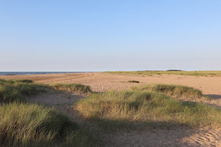 Grassy dunes on the beach at Holme in Norfolk.