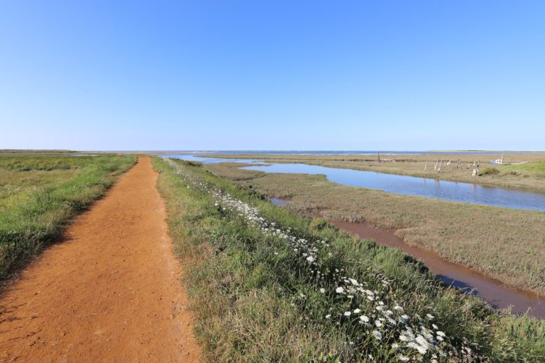 The Norfolk Coast Path bordered by white flowers at Thornham.