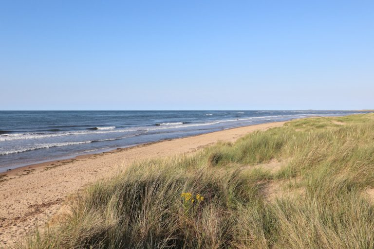 Grassy dunes and gentle waves at Thornham beach.