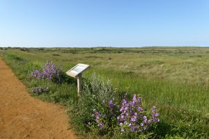 Information point surrounded by purple flowers at Thornham.
