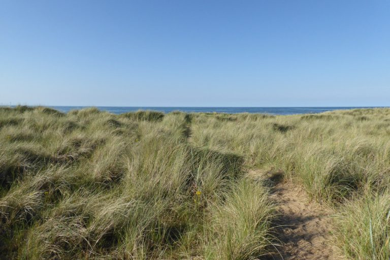 Grassy dunes and a blue sky at Thornham beach.