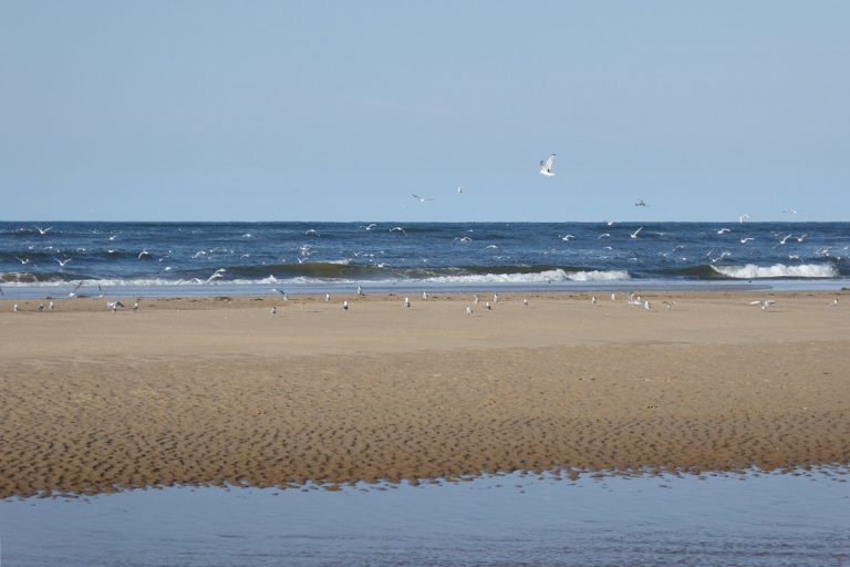 Gulls flying and resting on the beach at Thornham.