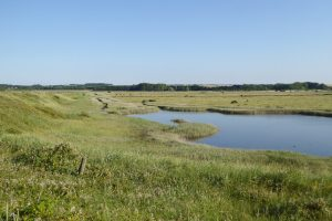 A pond surrounded by grazing marsh at Thornham.