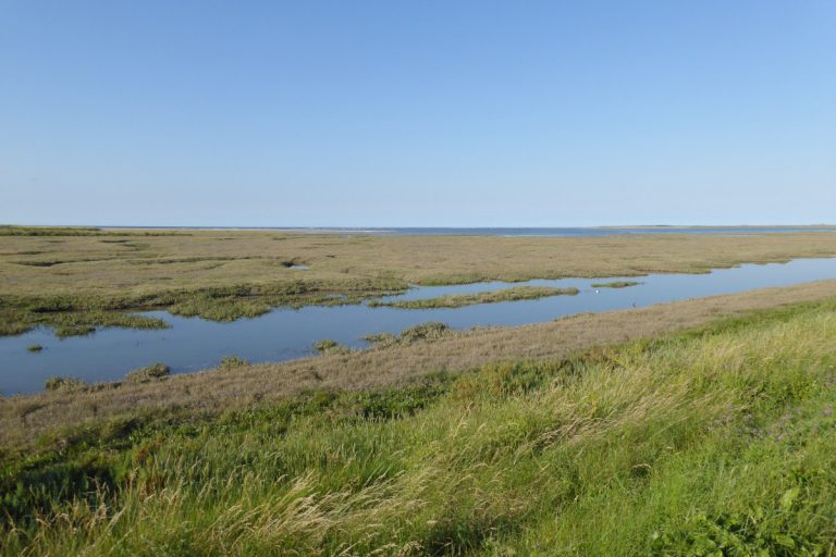 Waterlogged saltmarsh on the way to Thornham beach.