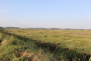 Grasses and fields at RSPB Titchwell Marsh.