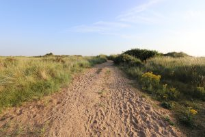 The sandy entrance to Titchwell beach with grasses and flowers.
