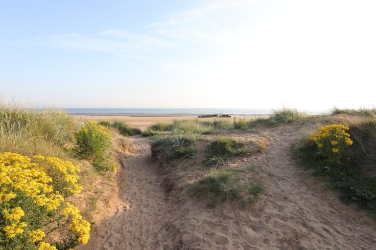 Grassy dunes and yellow flowers at Titchwell beach.