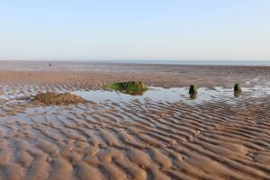 Algae covered debris in the mudflats at Titchwell beach.