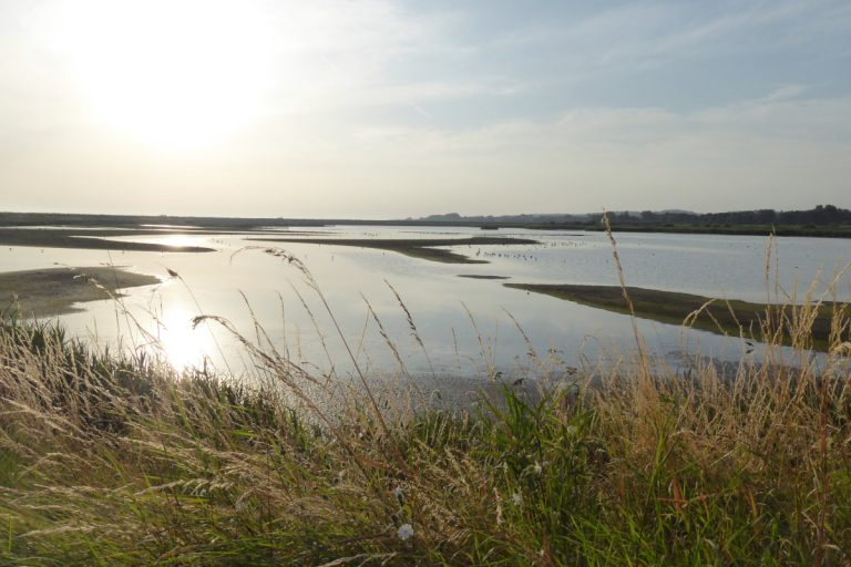 A watery lagoon bordered by grasses at RSPB Titchwell Marsh.