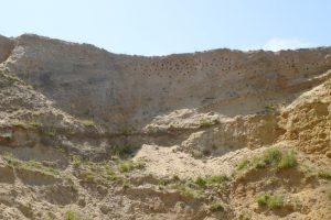 Bird nests in the cliffs at Weybourne beach.