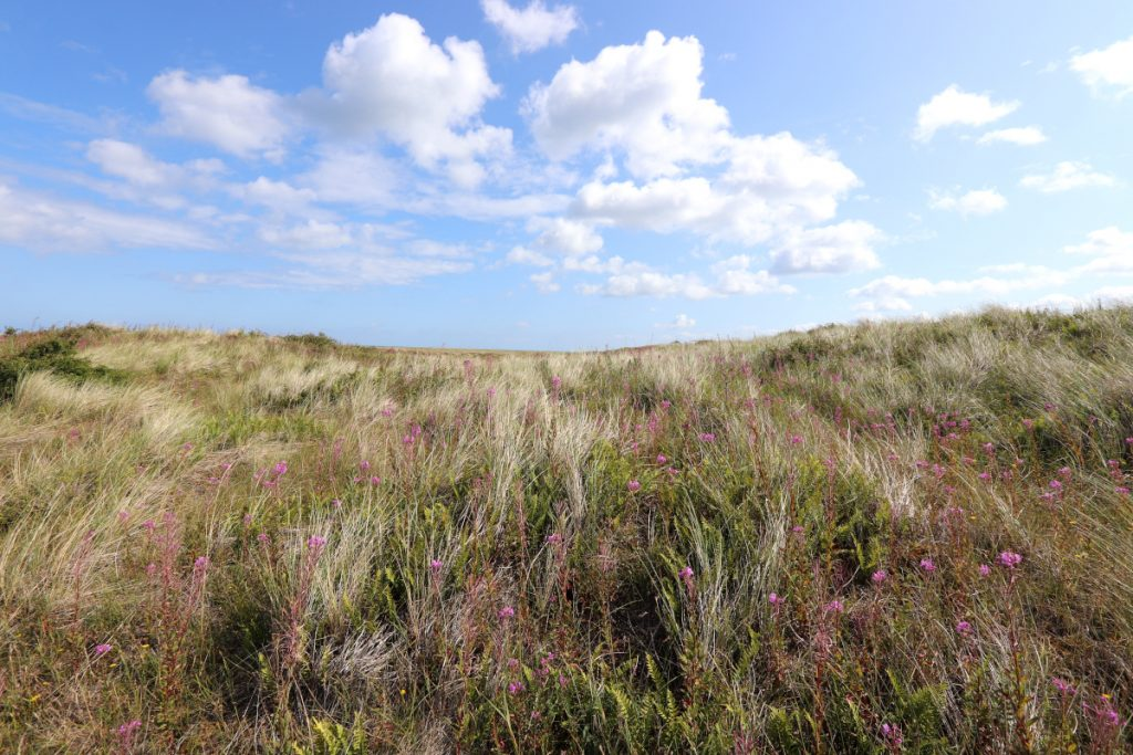 Flowers, ferns and grass blanket the floor under a blue sky at Blakeney Point.