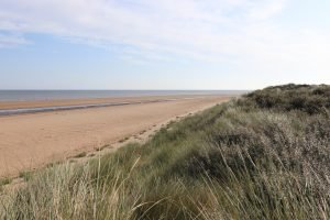 Sandy Holme beach with dunes covered in grasses and greenery.
