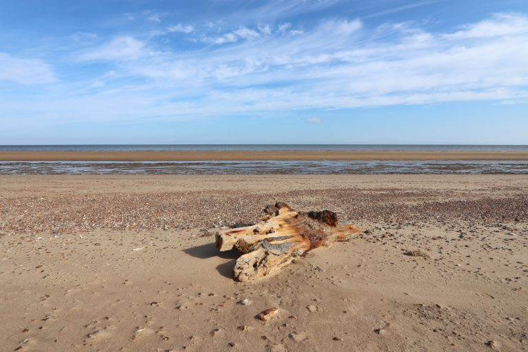 A large piece of driftwood on the beach at Holme in Norfolk.