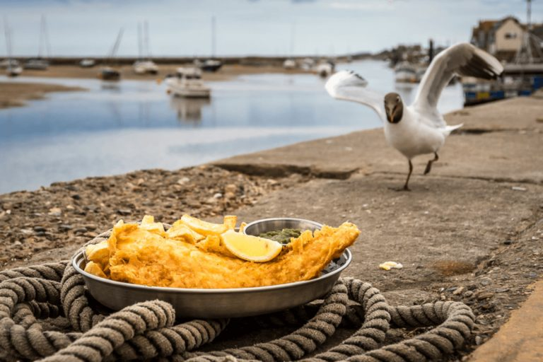 Seagull approaching a plate of fish and chips on the Quay outside the Season Restaurant.